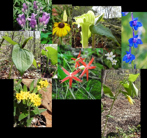 color photos of a variety of wildflowers