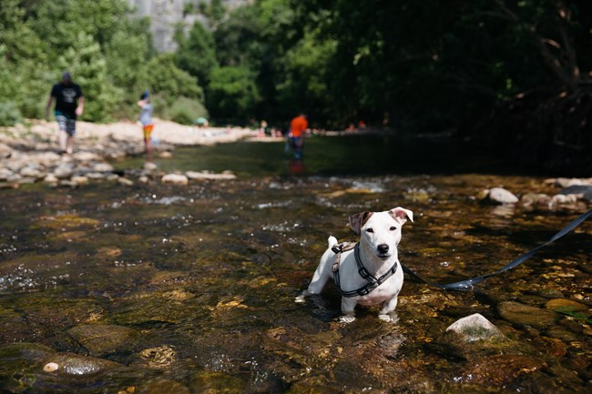 Little dog in river