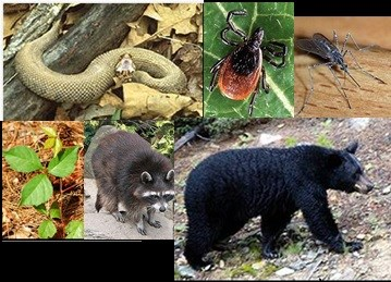 top left to right:copperhead snake on log, tick, mosquito; bottom l to r: poison ivy, raccoon, bear