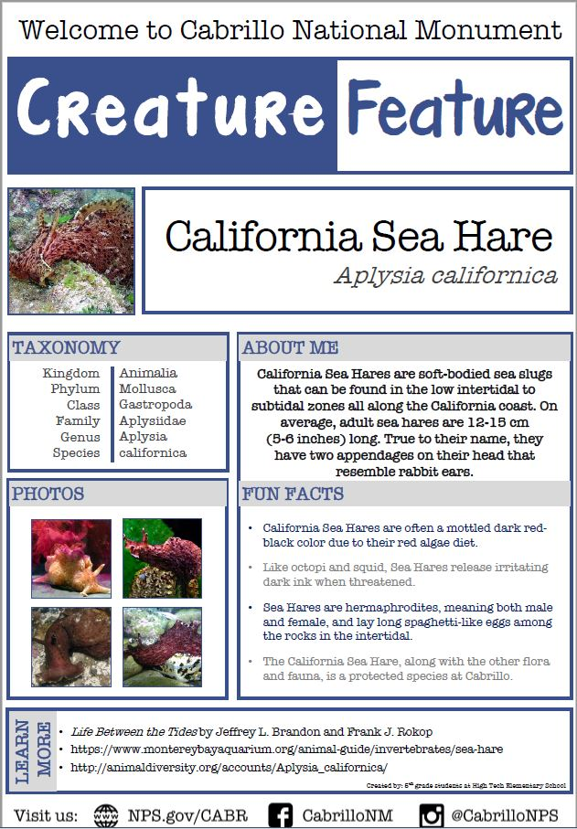 Information on the California Sea Hare