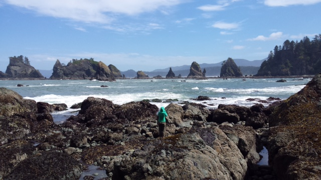 Cabrillo biologists exploring the intertidal zone at Olympic National Park