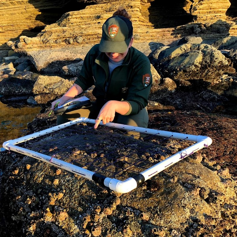 Ranger Alex shows off a quadrat used in Tidepool monitoring