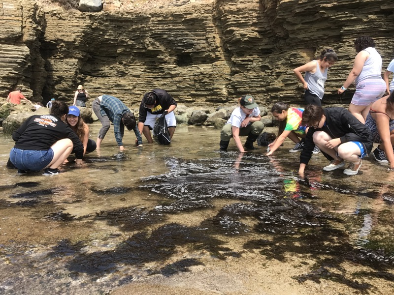 Photo of students in tidepools removing sargassum