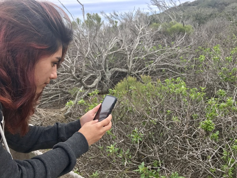 Person using phone to identify vegetation