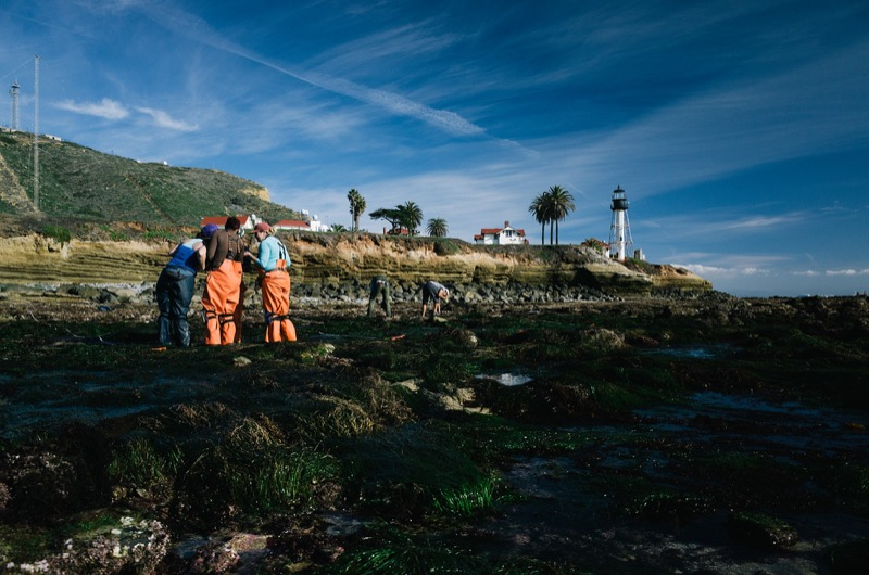 Scientists and volunteers conducting an annual tidepool survey at Cabrillo National Monument.
