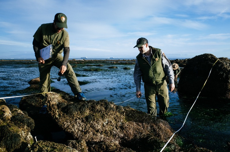 Scientists monitoring the tidepools