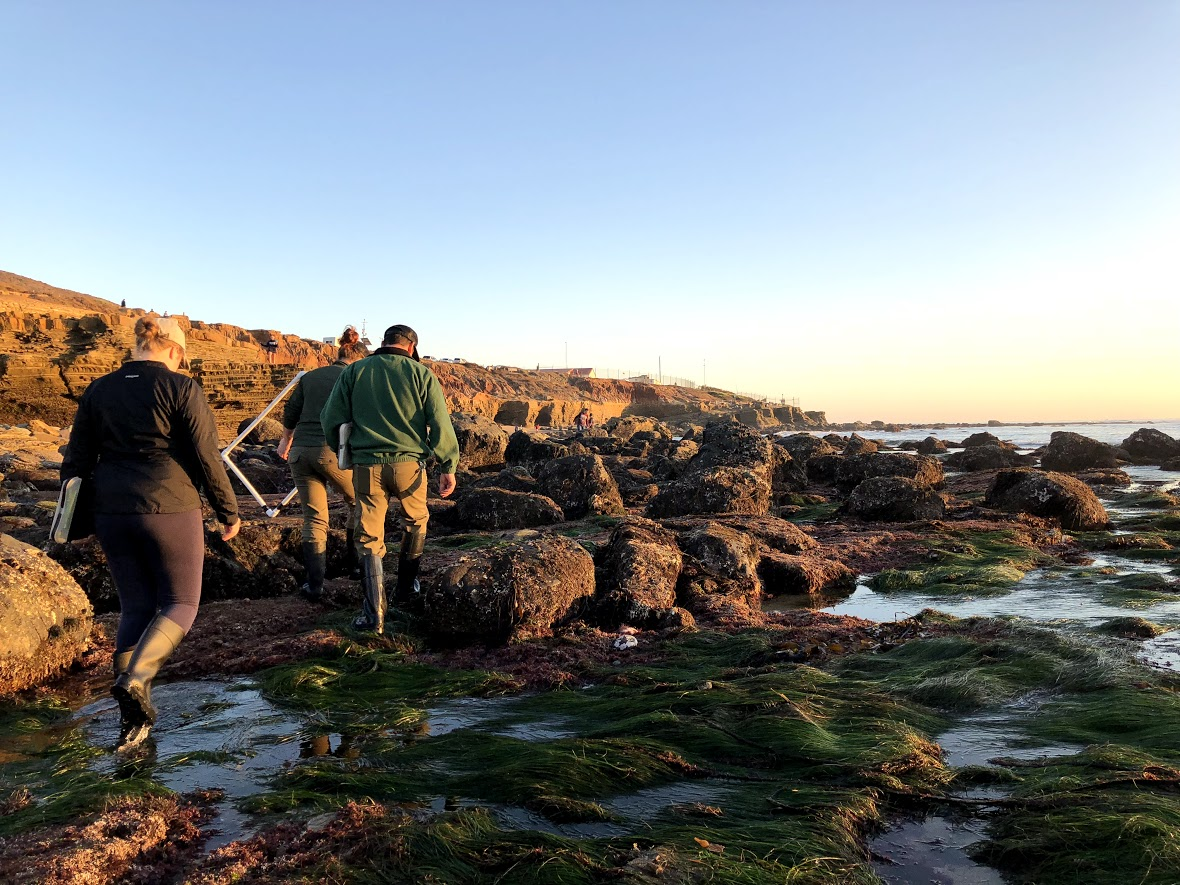 With quadrats and clipboards in hand, members of the Natural Resources team heads out of the tidepools after a day of monitoring.