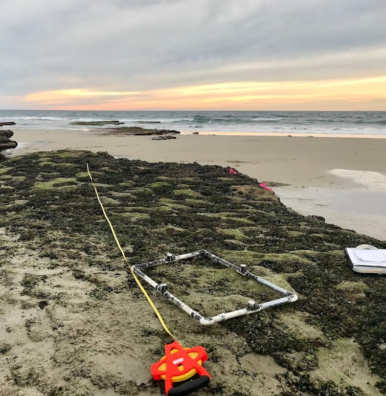 A transect at nearby Cardiff State Beach, which our Natural Resources team also monitors for site comparison.