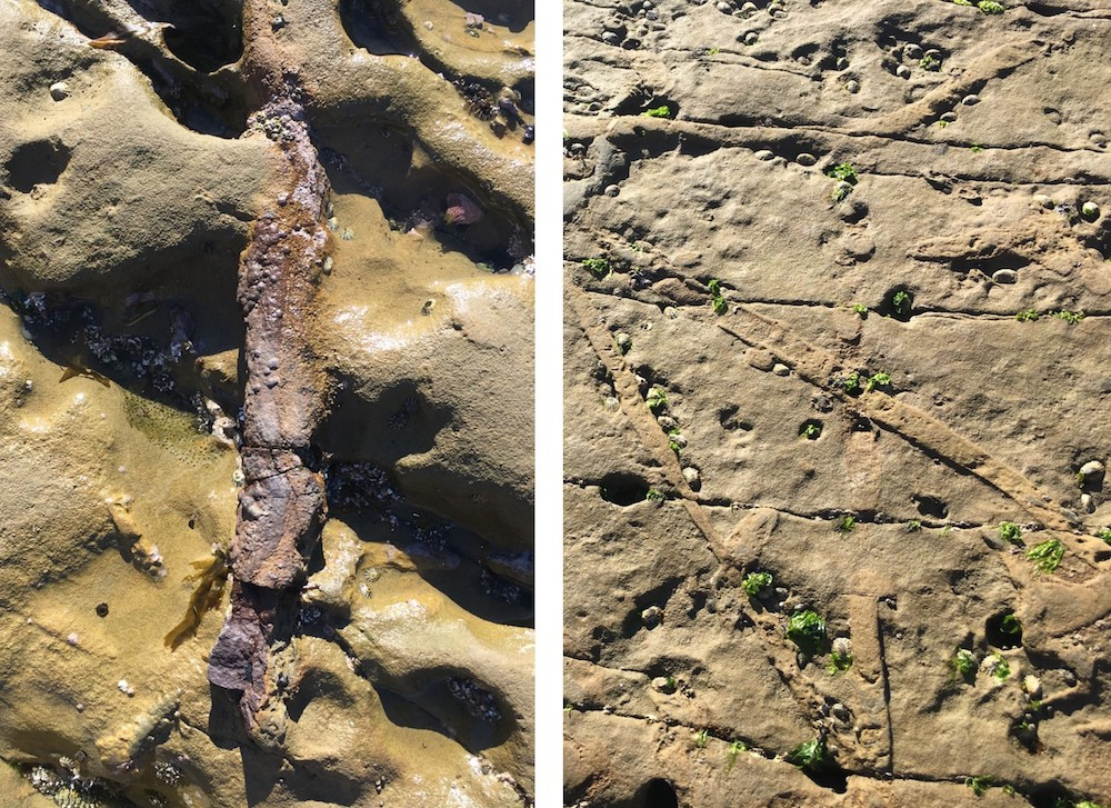 fossilized burrows of Ophiomorpha (left) and Thalassinoides (right) in the Cabrillo National Monument tidepools.