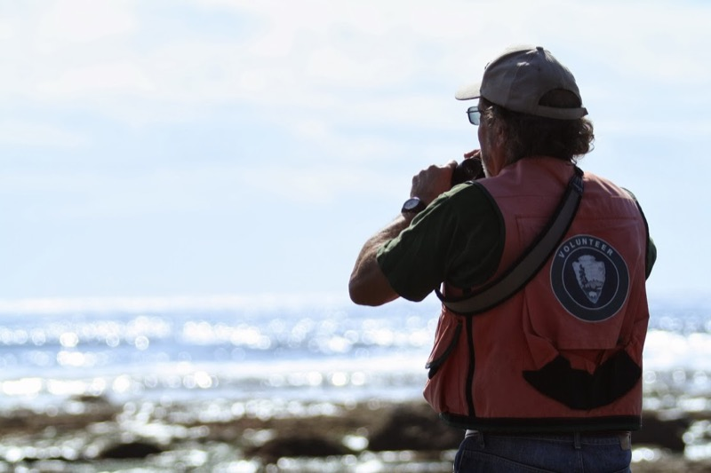 A surveyor searching for shorebirds along the rocky intertidal