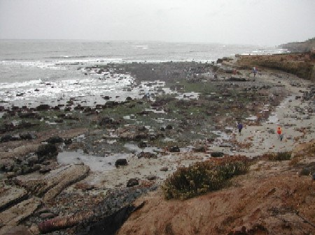 Tidepools at Cabrillo National Monument