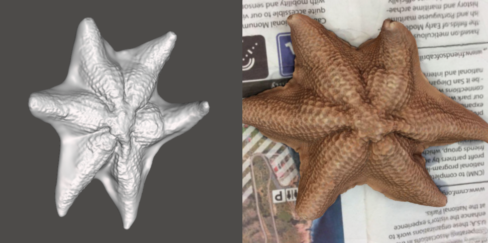 Photo showing 3d model of Bat Star