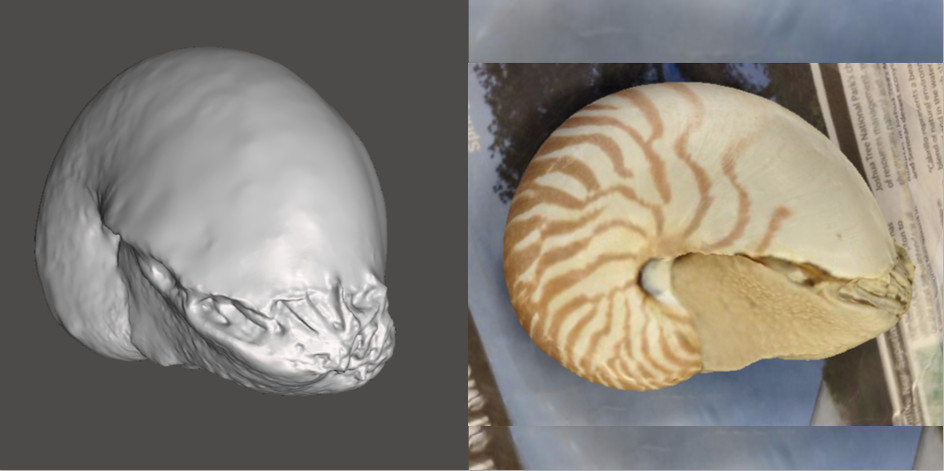 Photo showing 3d model of Chambered Nautilus