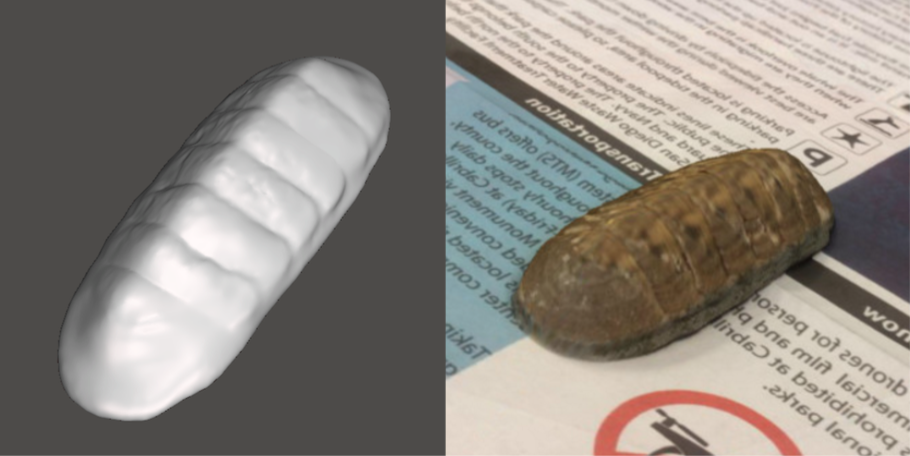 Photo showing 3d model of Chiton
