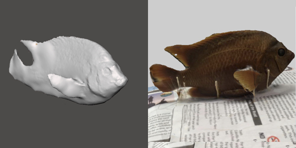 3d model of a Adult Garibaldi
