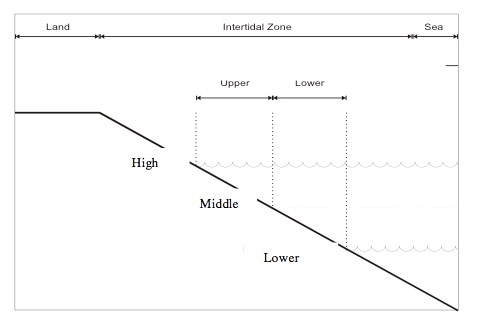 A graph with a diagonal line from upper left to bottom right showing the different zones (high, middle and low) in relation to the shoreline at the top