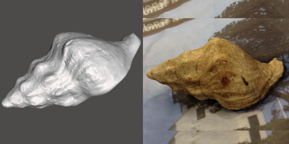 Photo showing 3d model of Kellet's Whelk