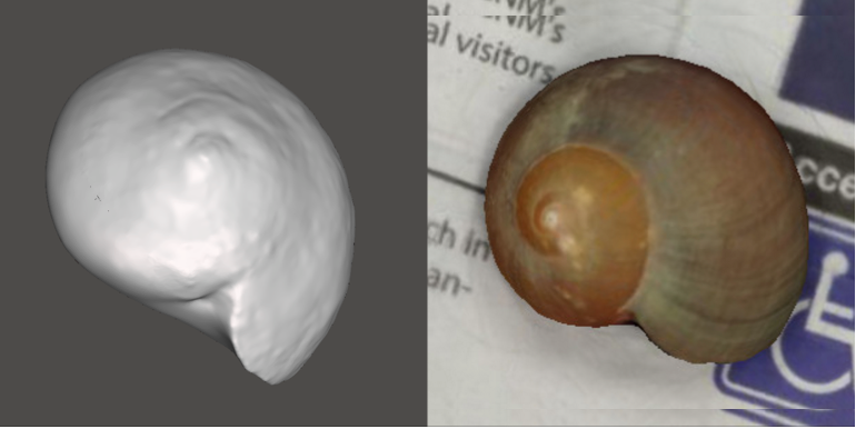 Photo showing 3d model of Kelp Snail