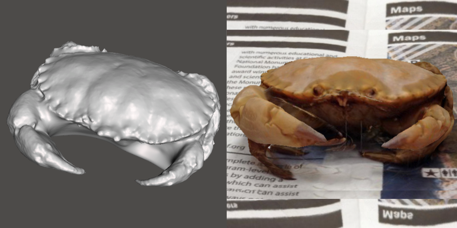 Photo showing 3d model of Rock Crab