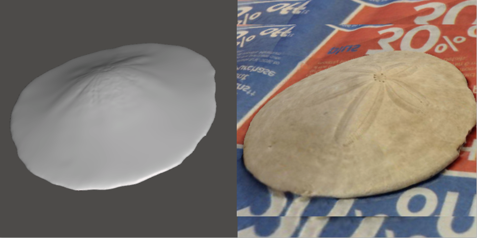 Photo showing 3d model of Sand Dollar
