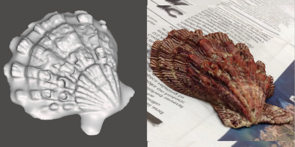 Photo showing 3d model of Scallop