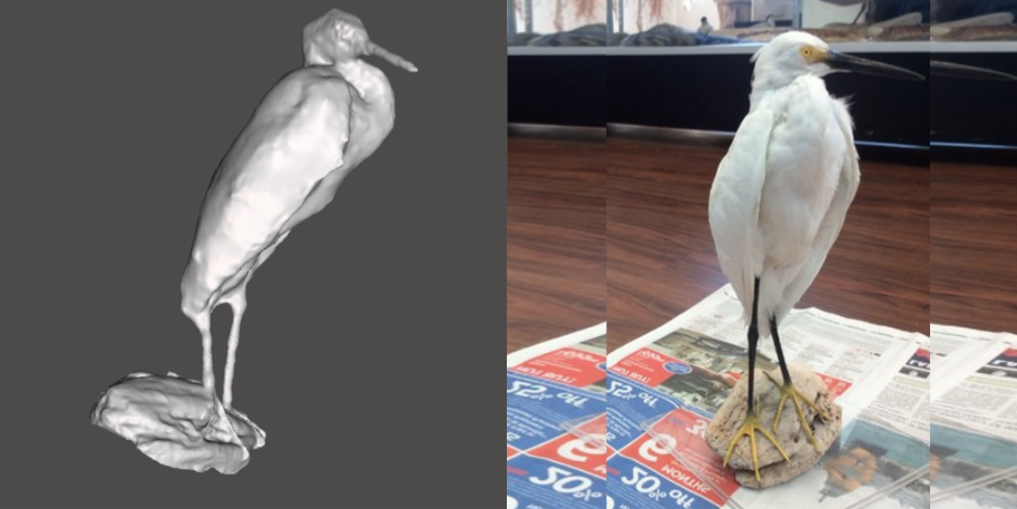 Photo showing 3d model of a Snowy Egret