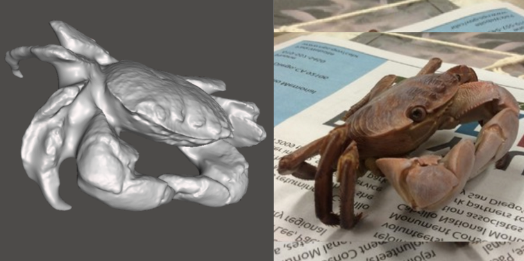 Photo showing 3d model of a Striped Shore Crab