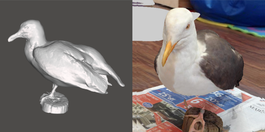 Photo showing 3d model of a Western Gull