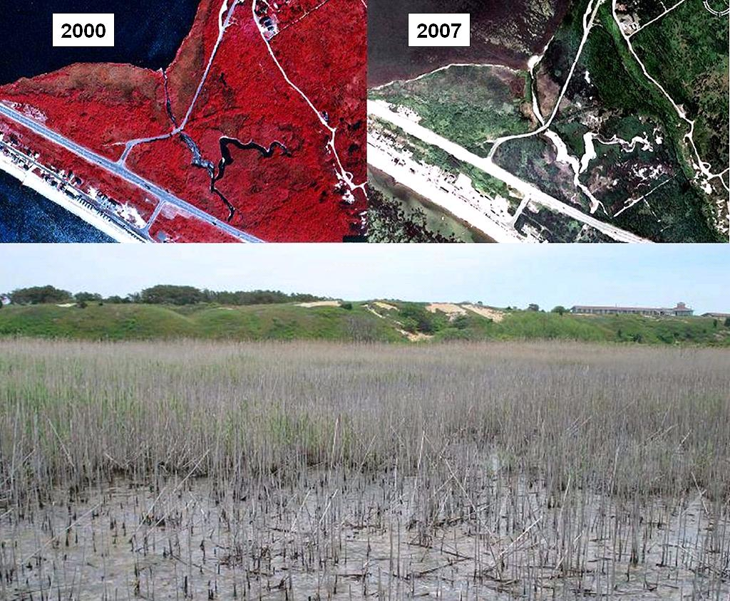 marsh vegetation changes since restoration began