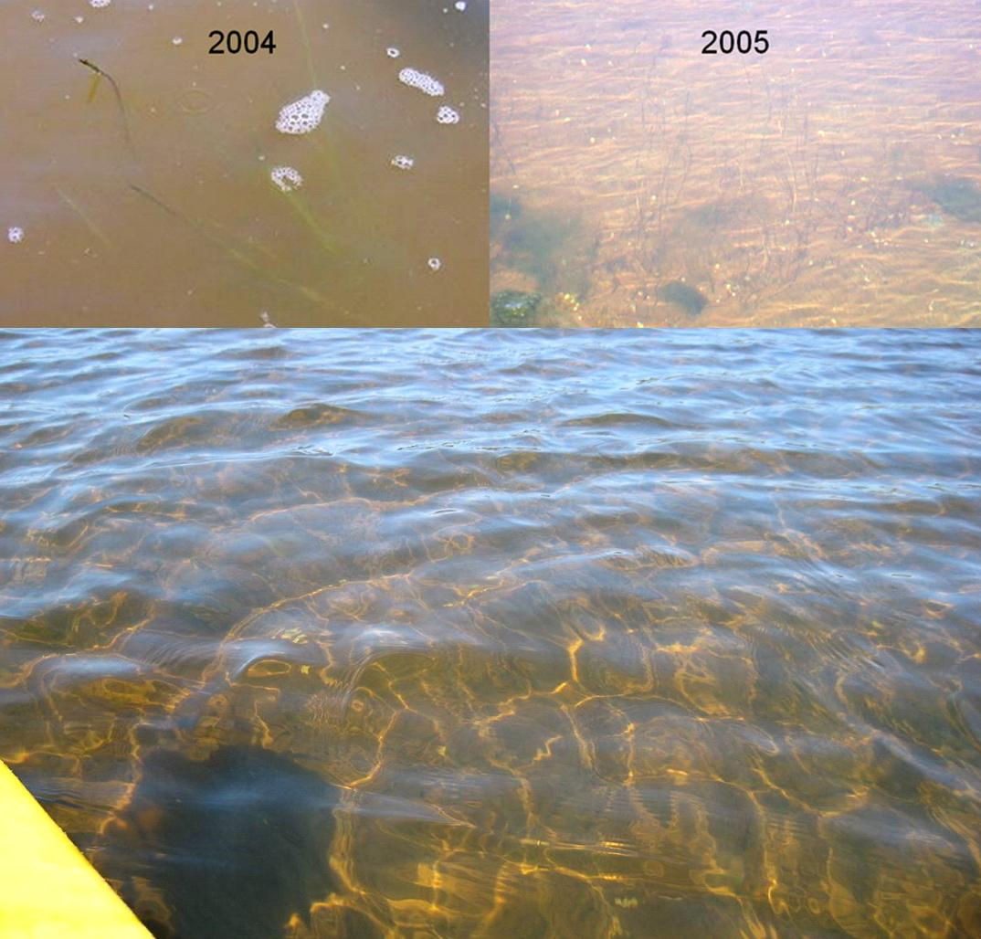 transoformation in water clarity in East Harbor since tidal restoration began
