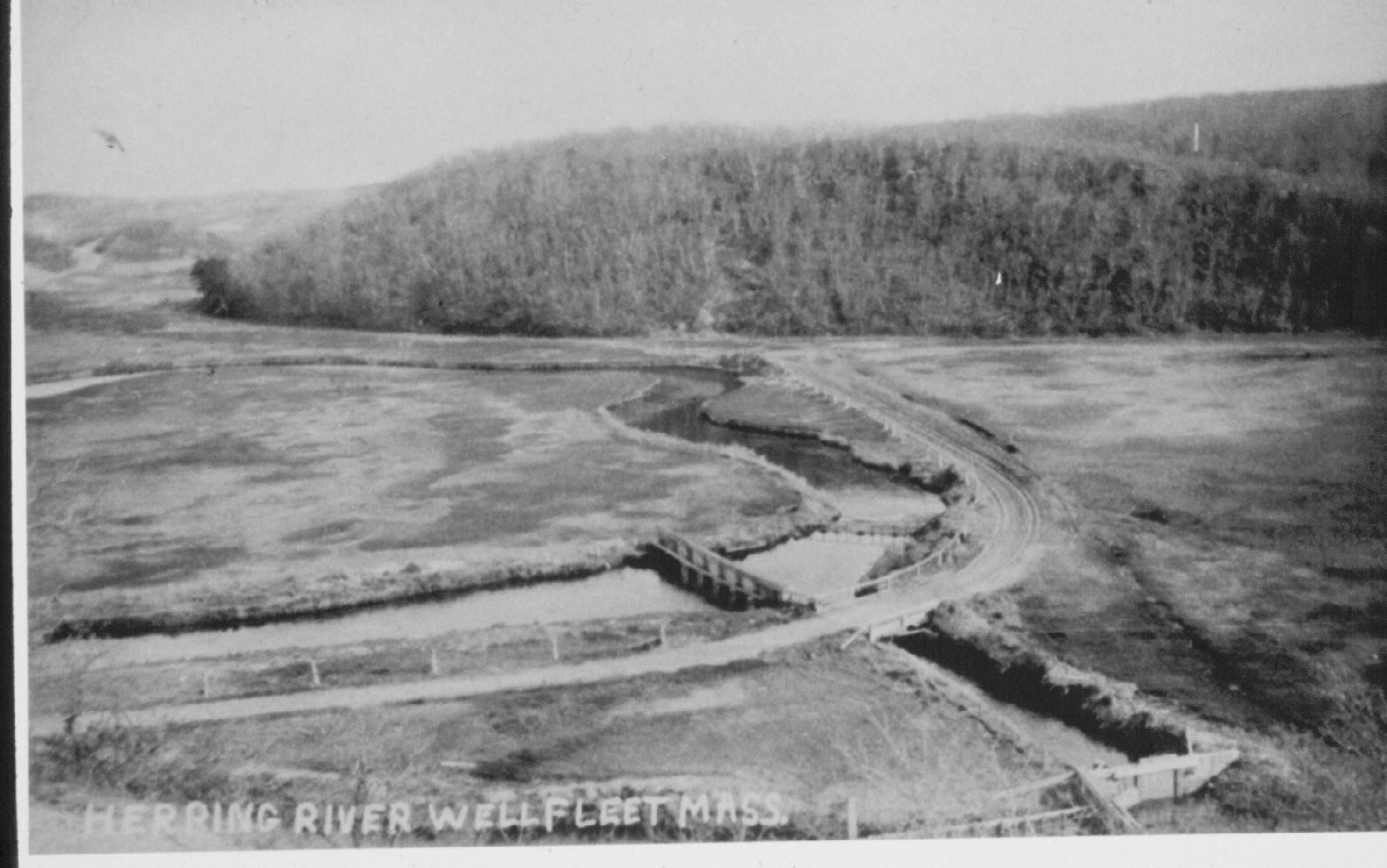 Herring River 1903