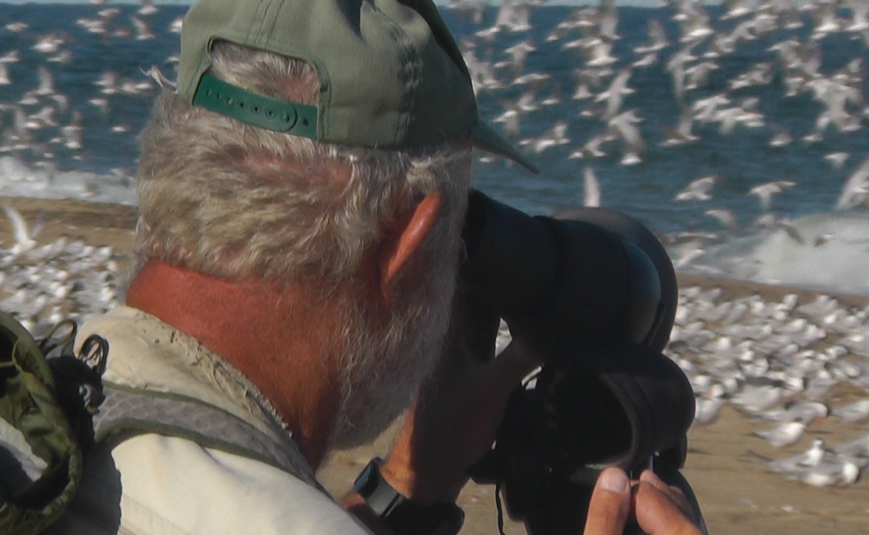 A man looks through a scope at birds on a beach.