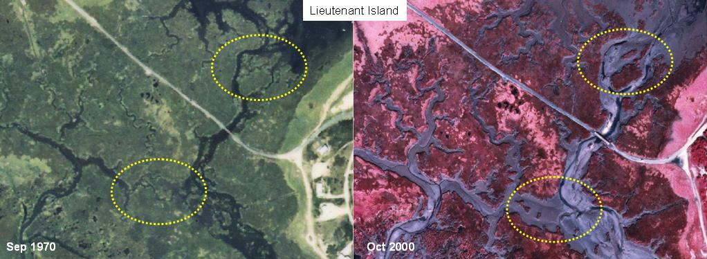 Marsh loss around Lt. Island (Wellfleet)
