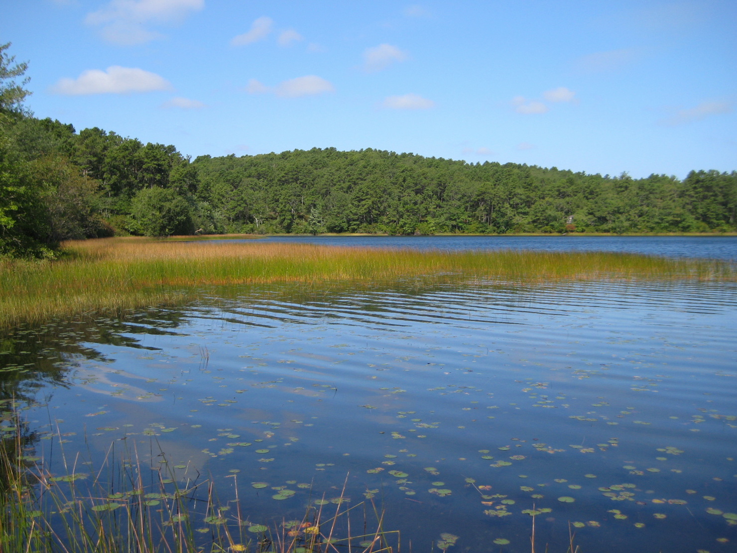 A view of a kettle pond shoreline at Cape Cod National Seashore.