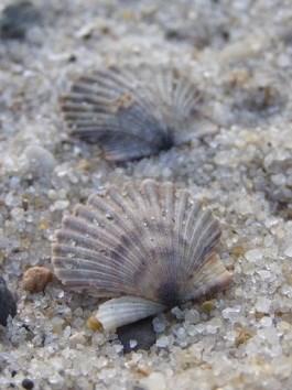 marine invertebrates cape cod national seashore u s national