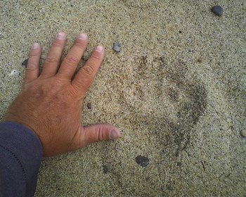 bear track with hand