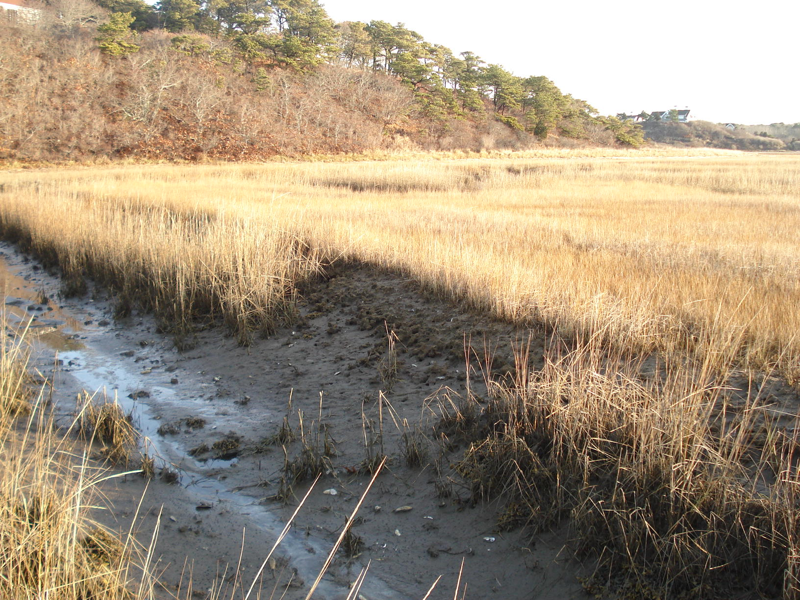 lost chunk of marsh in Chatham