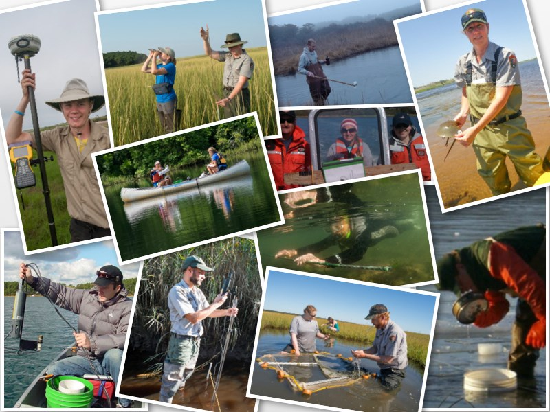 A collage of Cape Cod National Seashore science staff involved in a variety of research and monitoring activities.