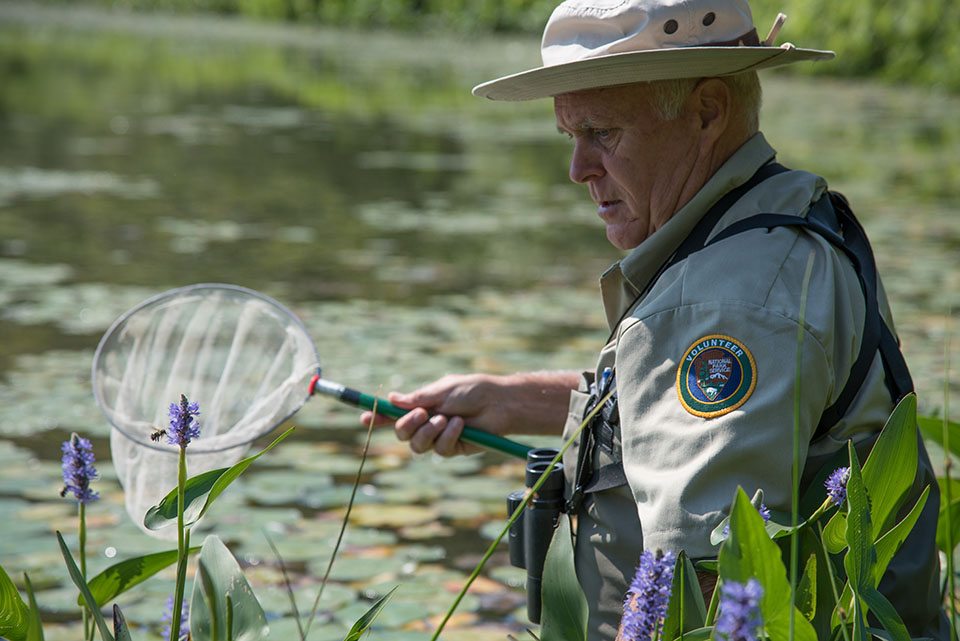 A man holding a net approaches a perched dragonfly on a marsh plant.
