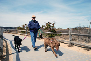 A woman walks two dogs down a boardwalk over a sandy area.