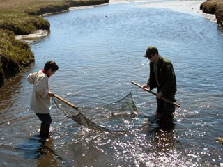 A ranger and a child use a net in water in a marshy area.