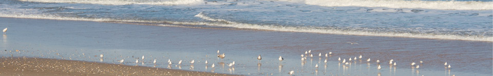 Spring-time view of the seashore, with shorebirds returning to the surf.