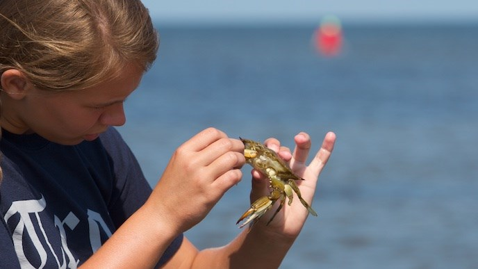 Visitor examining a blue crab
