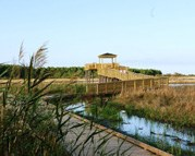 This boardwalk offers an excellent view of a freshwater marsh.