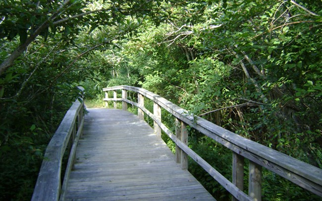Boardwalk path along the Buxton Woods Trail