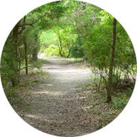 Buxton Woods Trail