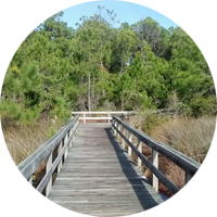 Hammock Hills boardwalk at the Pamlico Sound