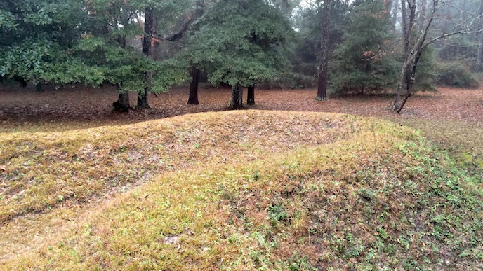 Part of the earthwork visible in the woods of Fort Raleigh National Historic Site