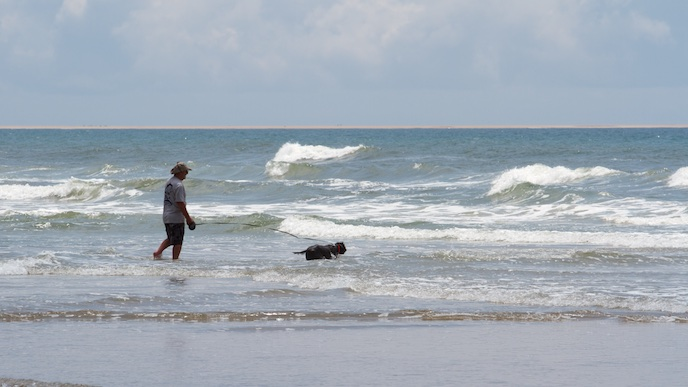 Visitor in the surf with their dog