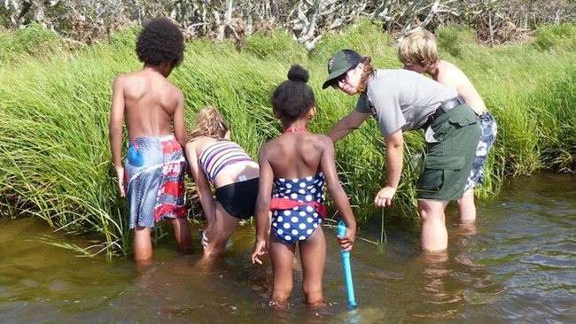 Ranger and kids seining in salt marshes of Pamlico Sound